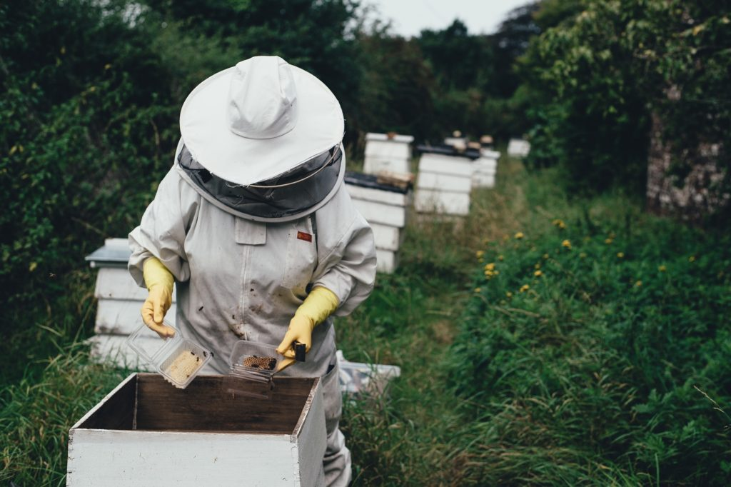 Apiary bee farm and beehive - https://pixabay.com/photos/apiary-bee-bee-farm-beehive-1866740/